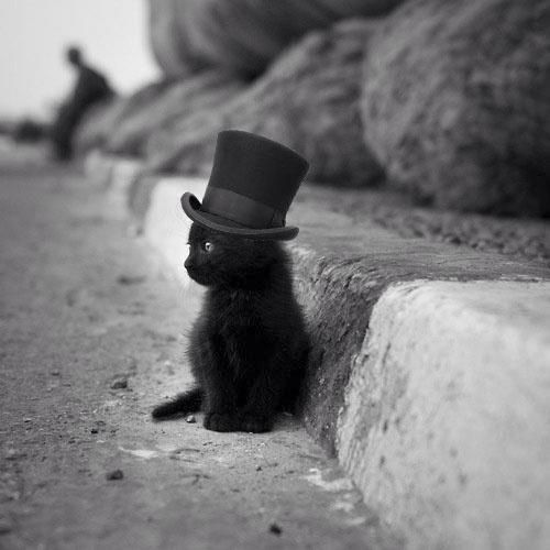Dapper kitten