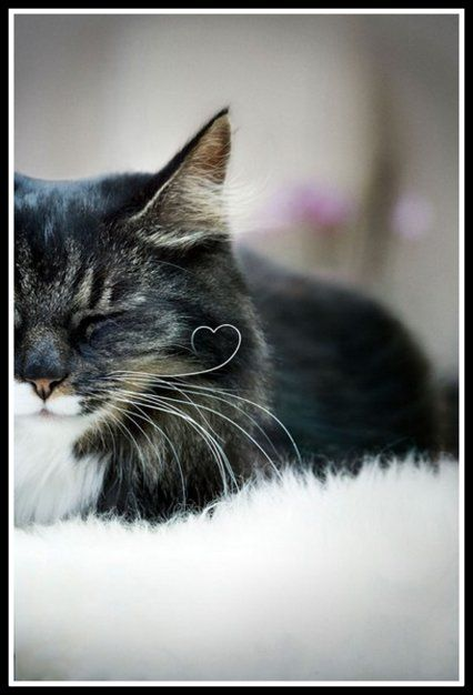 Heart whiskers