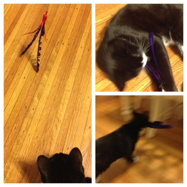 Tux playing with Da Bird
