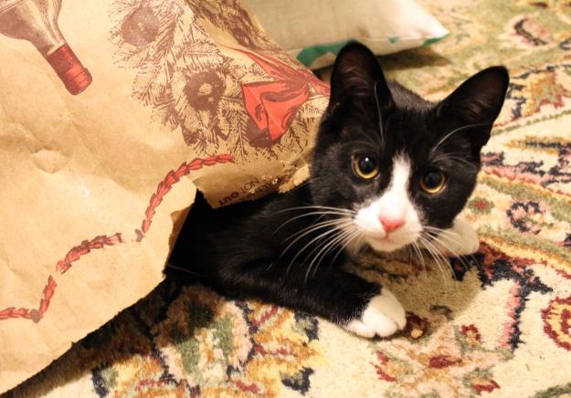 Tux in bag