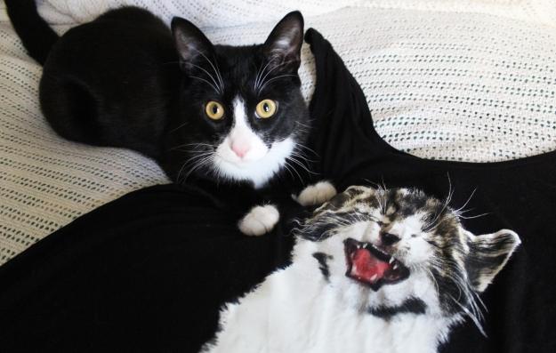 Tux with cat shirt