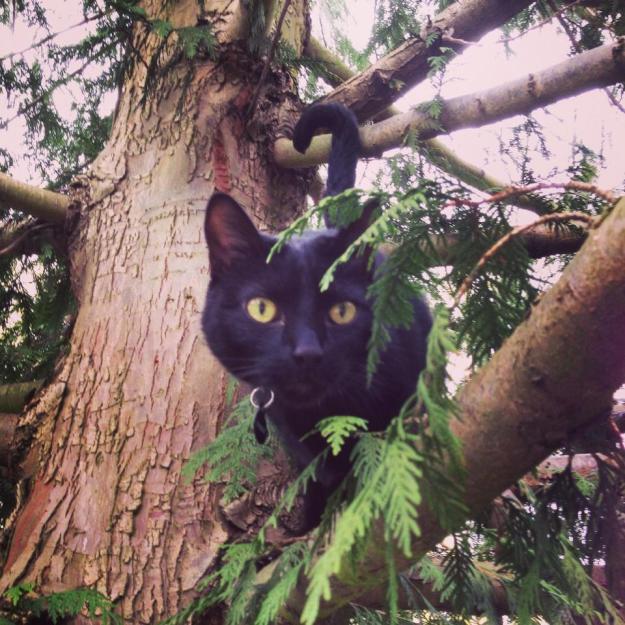 Black cat stuck in tree