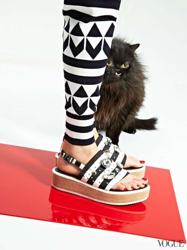 cats-kittens-flats-shoes-06_17272970411