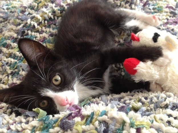 Tux with Lambie