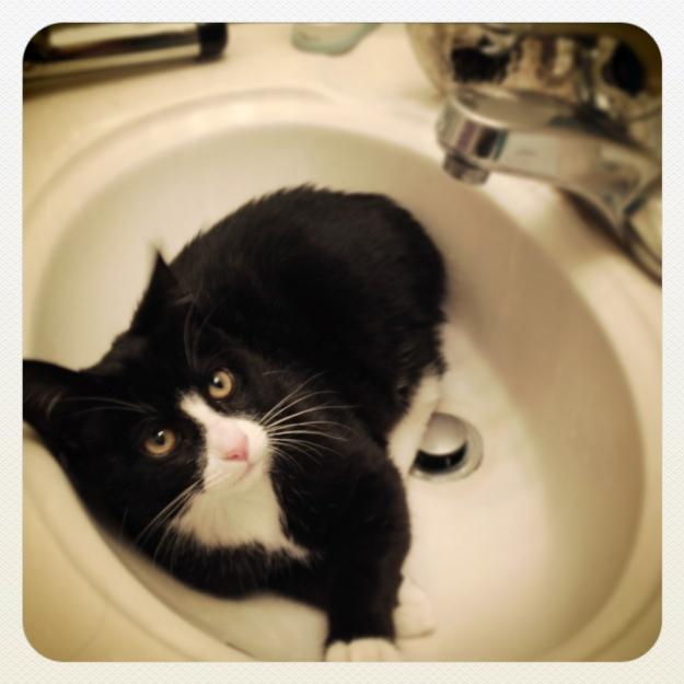 Tux in sink