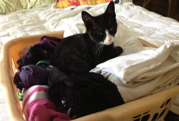 Tux on laundry