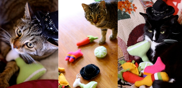 Cats and toys