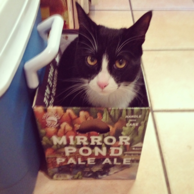 Tux in beer carton