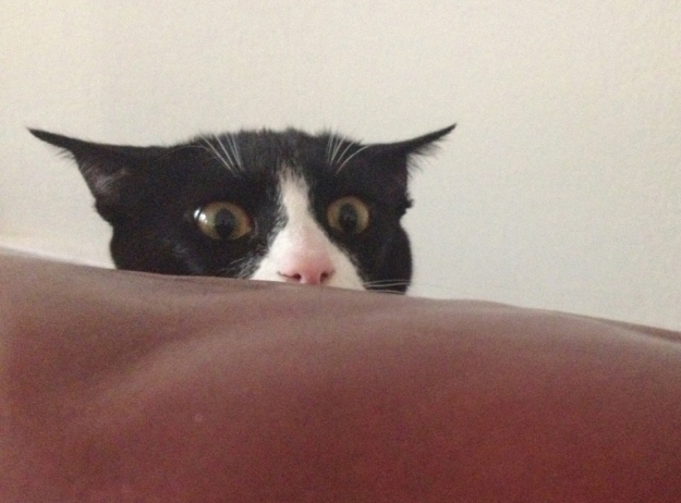 Tux couch pounce