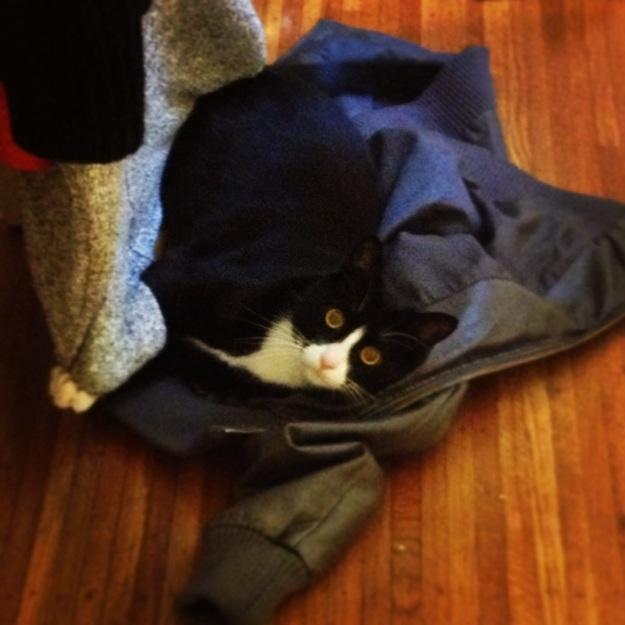 Tux on jacket