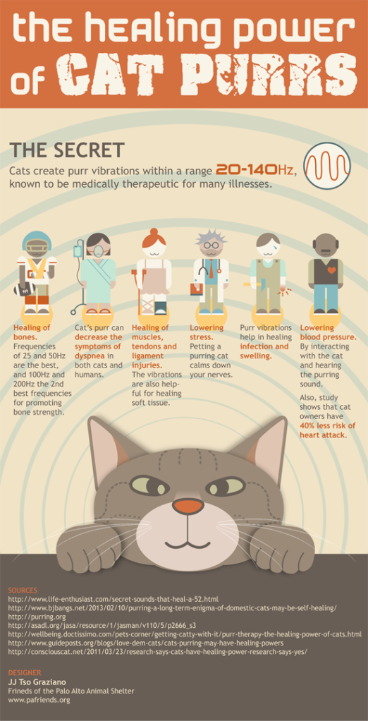 Cat Purring Healing Power
