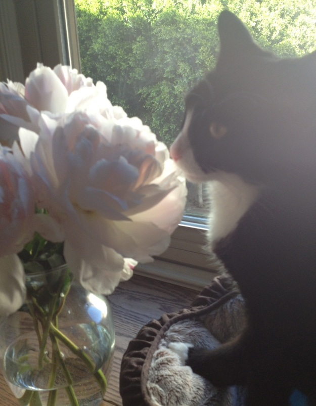 Tux smelling flowers