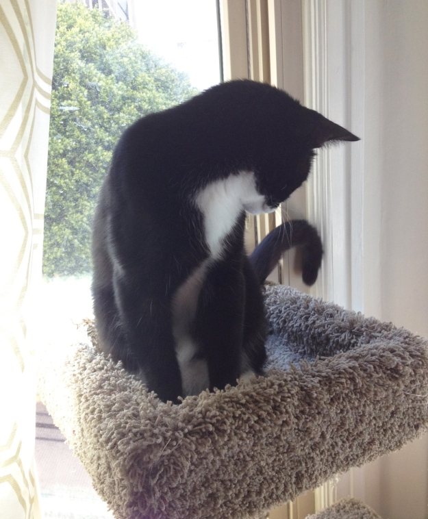 Tux tail