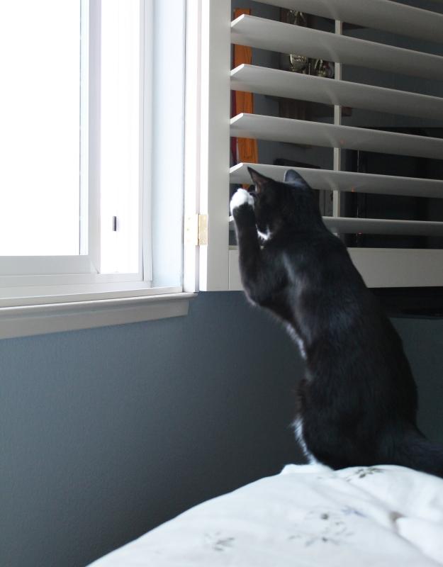 Tux meerkat 3