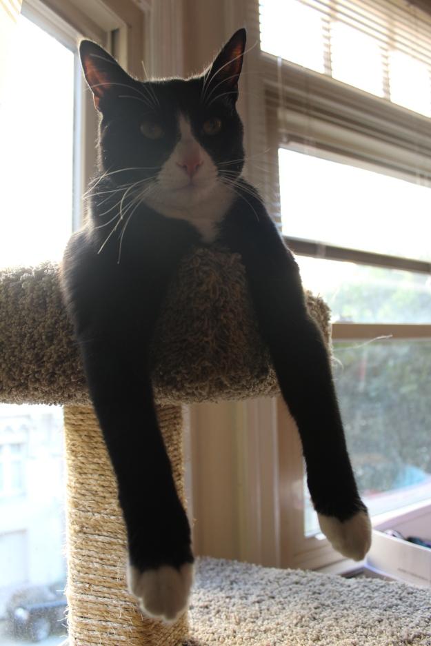 Tux hanging 2
