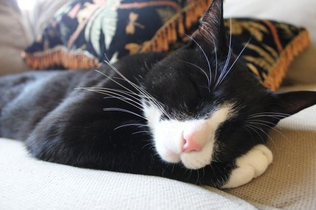 Sleepy Tux