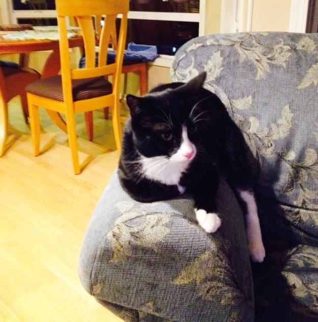 Tux lounging