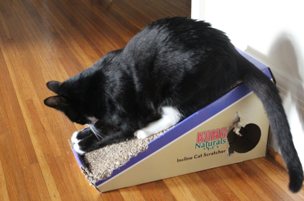 Tux on the old scratcher