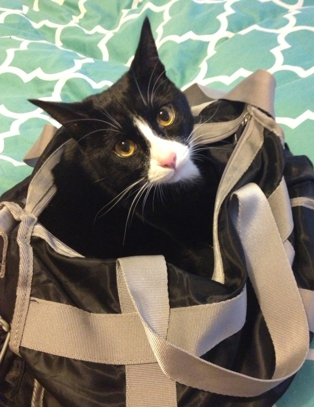 Tux in gym bag