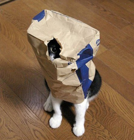 Cat paper bag