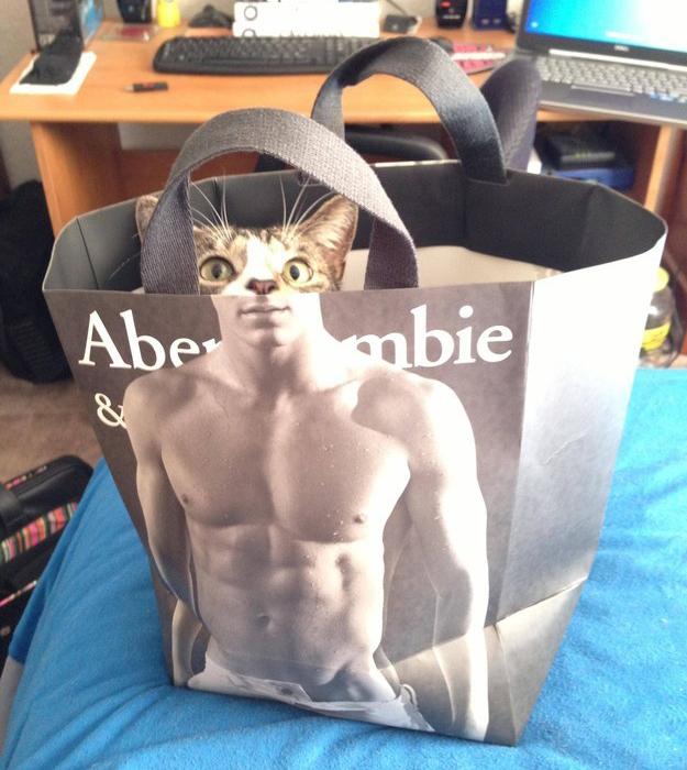 Cat abercrombie bag