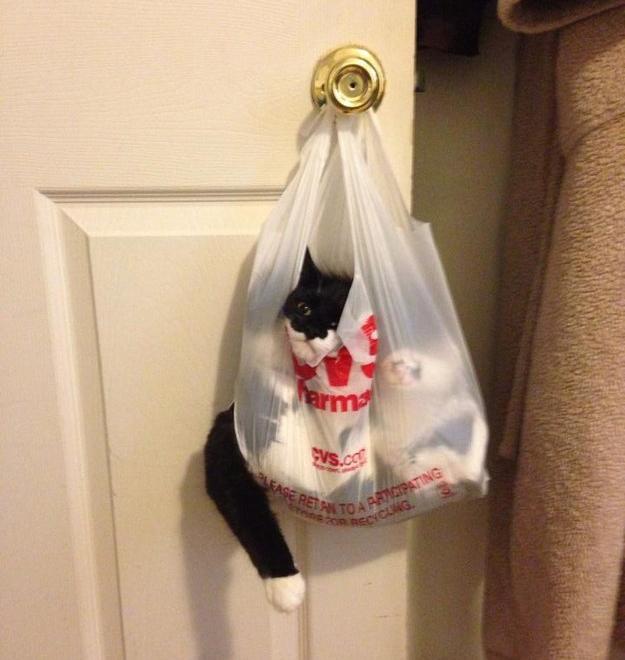 Cat hanging bag