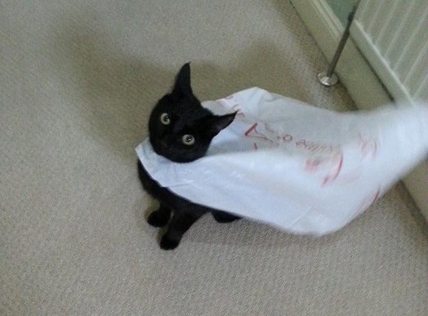Cat cape bag