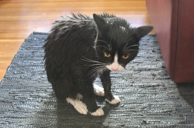 Tux not pleased by being wet