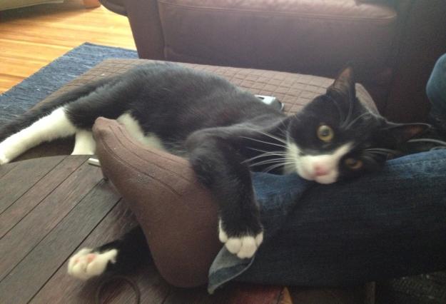 Tux hugging leg