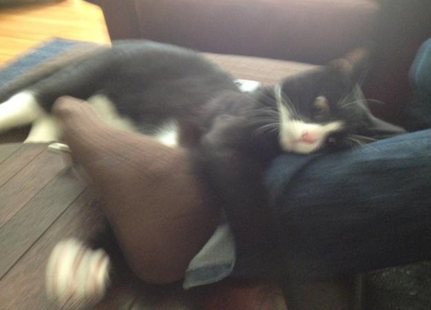 Tux attacking leg