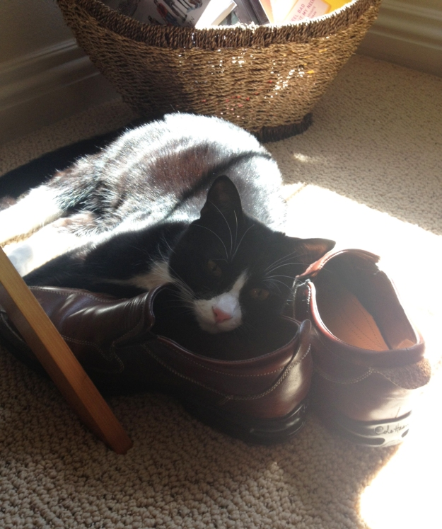 Sleeping in the sunlight on dad's shoes