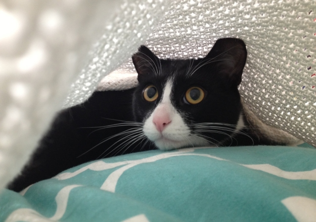 Tux blanket