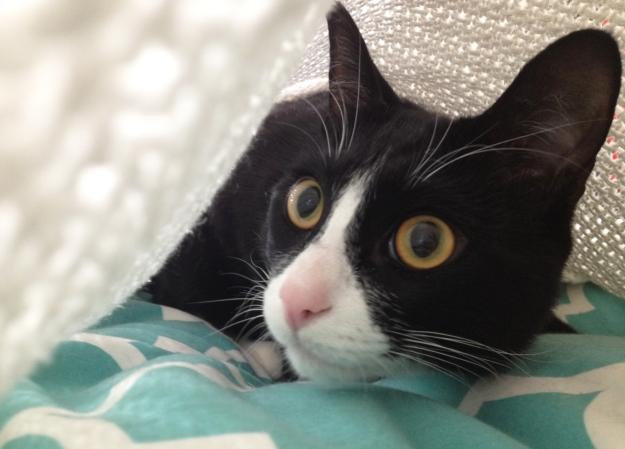 Tux blanket 2