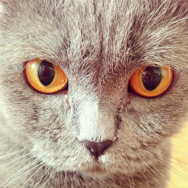 Dita the Cat 3
