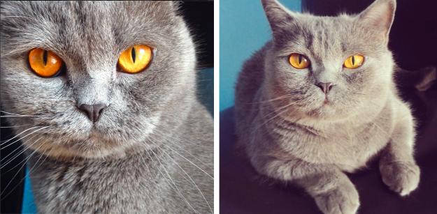 Dita the Cat instagram