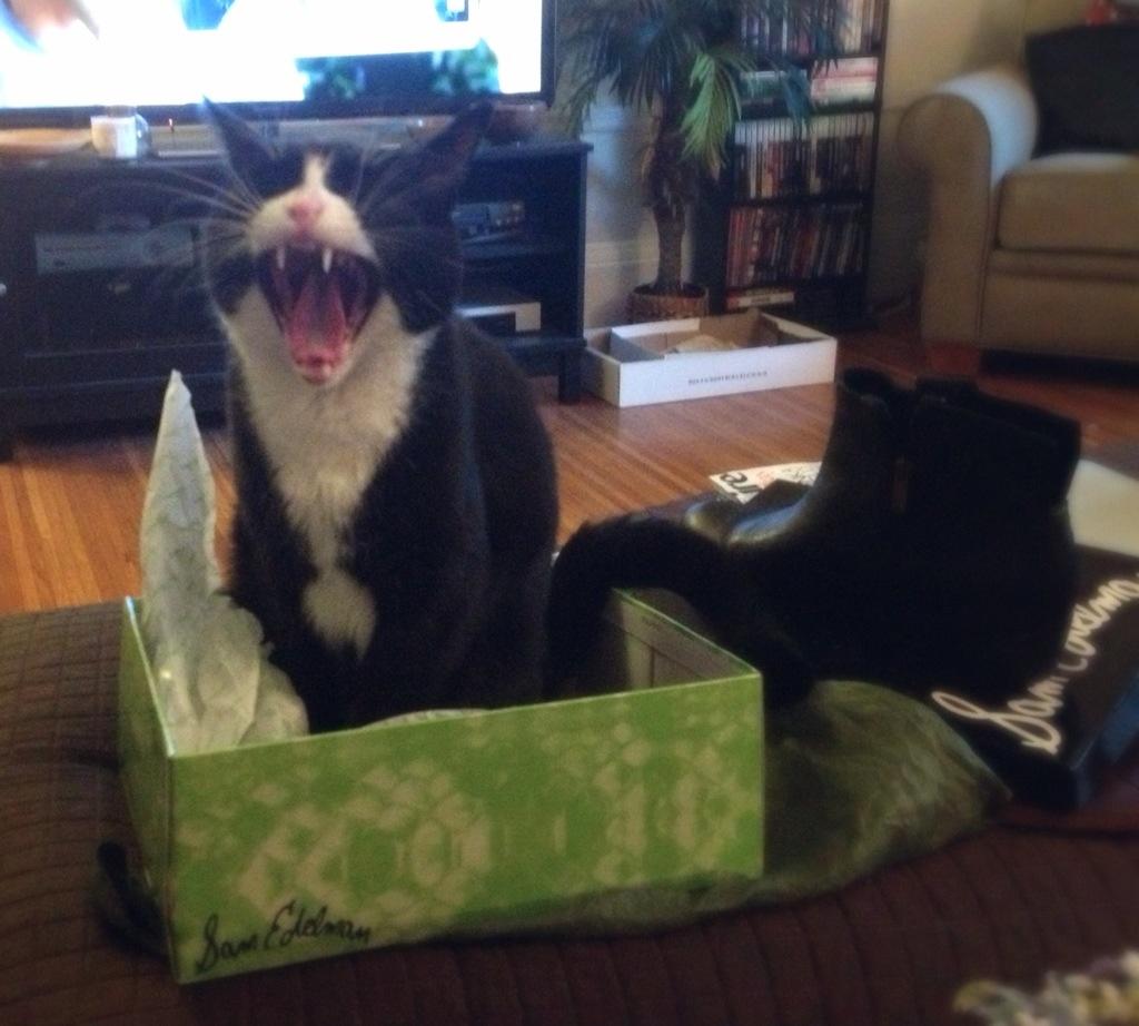 Tux in box