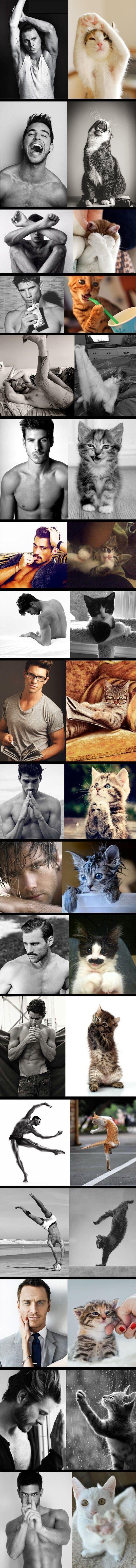 Cats vs. Male models