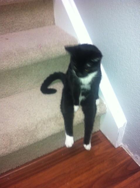 Cat who sits like a human 2