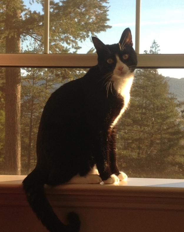 Tux in window
