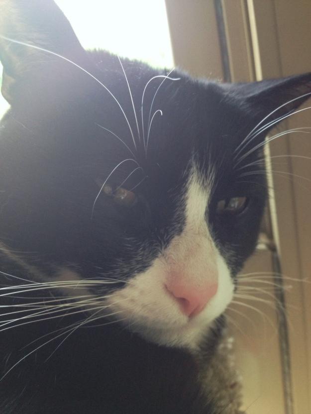 Grumpy selfie Tux