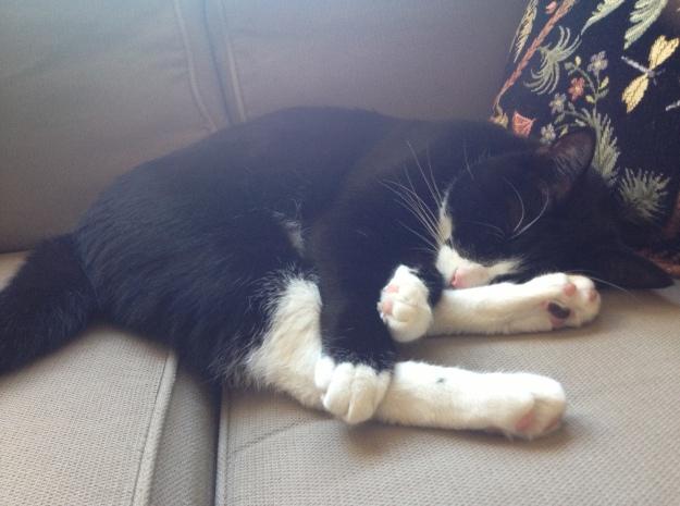 Tux sleeping