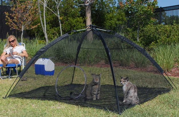 Cats in tent