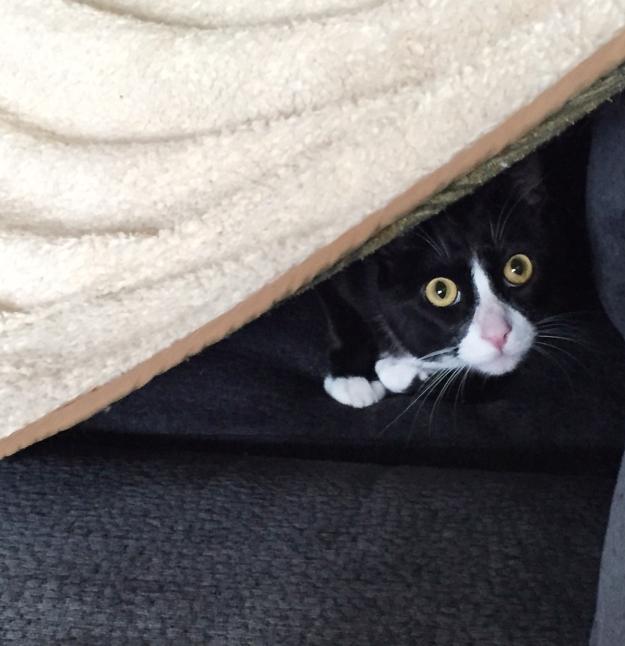 Tux peeking out of blanket