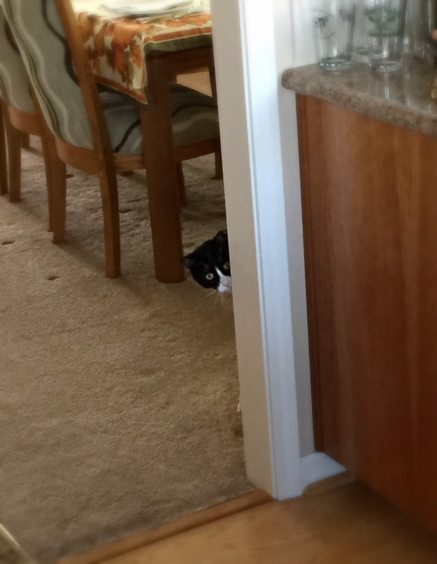 Tux peeking around corner