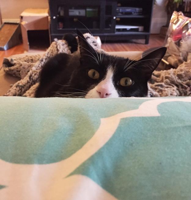 Tux behind pillow