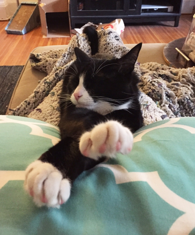 Tux with paws on pillow