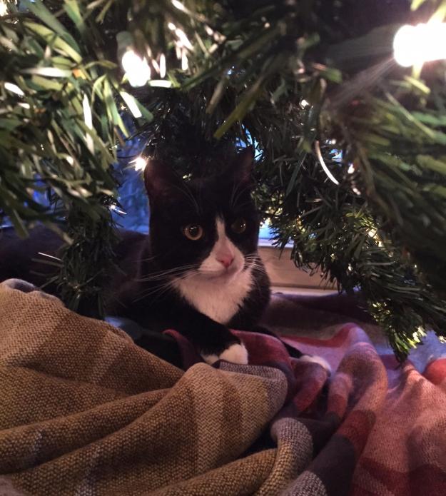 Tux under tree