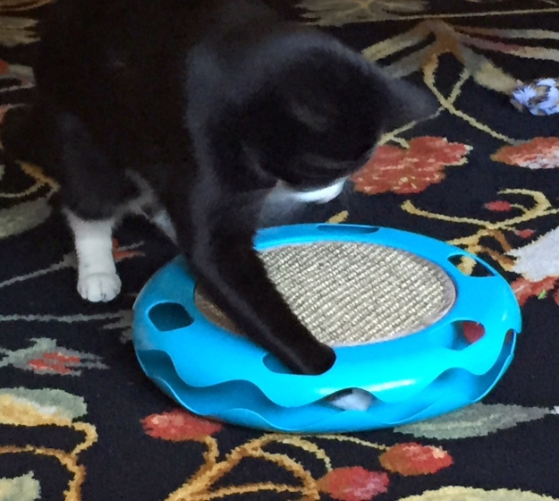 Tux and his track toy