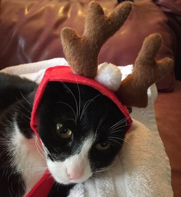 Tux reindeer