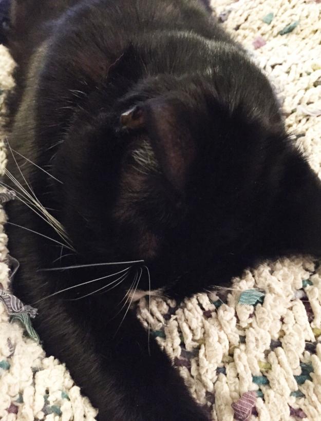 Tux sleeping 2